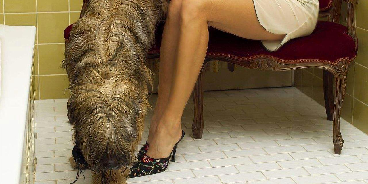 曲大师:养了十年的狗和交往了一年的女友,你选哪个?