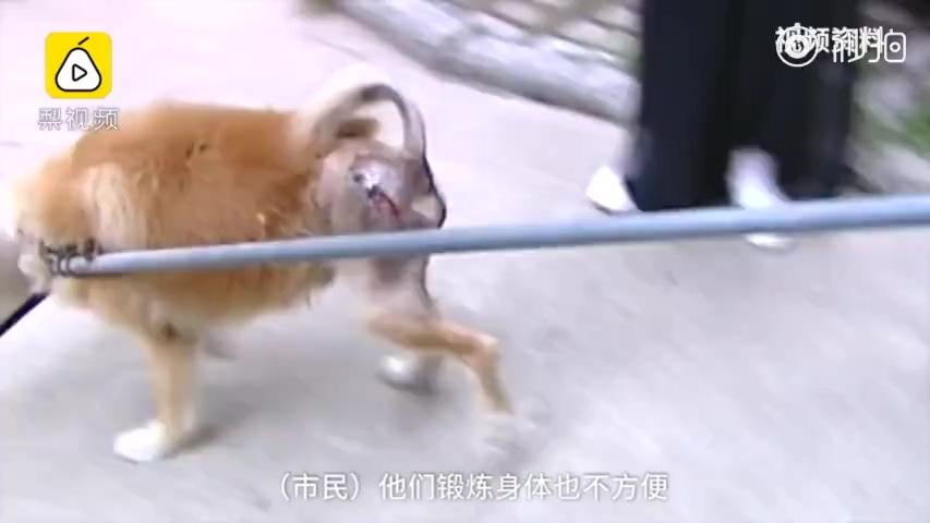 文山城管回应7点至22点禁止遛狗